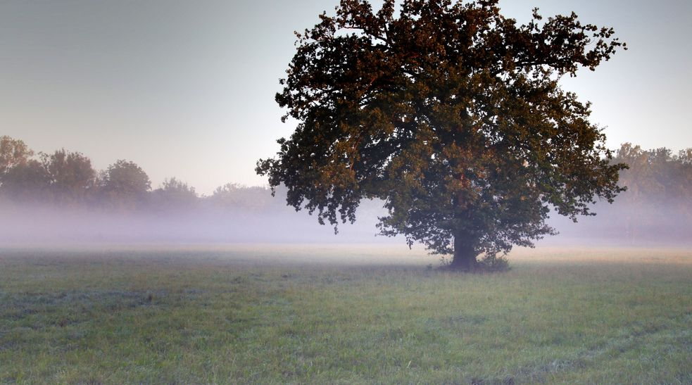 Autumn shot in the Dachauer Moos, a tree stands on a meadow in the fog