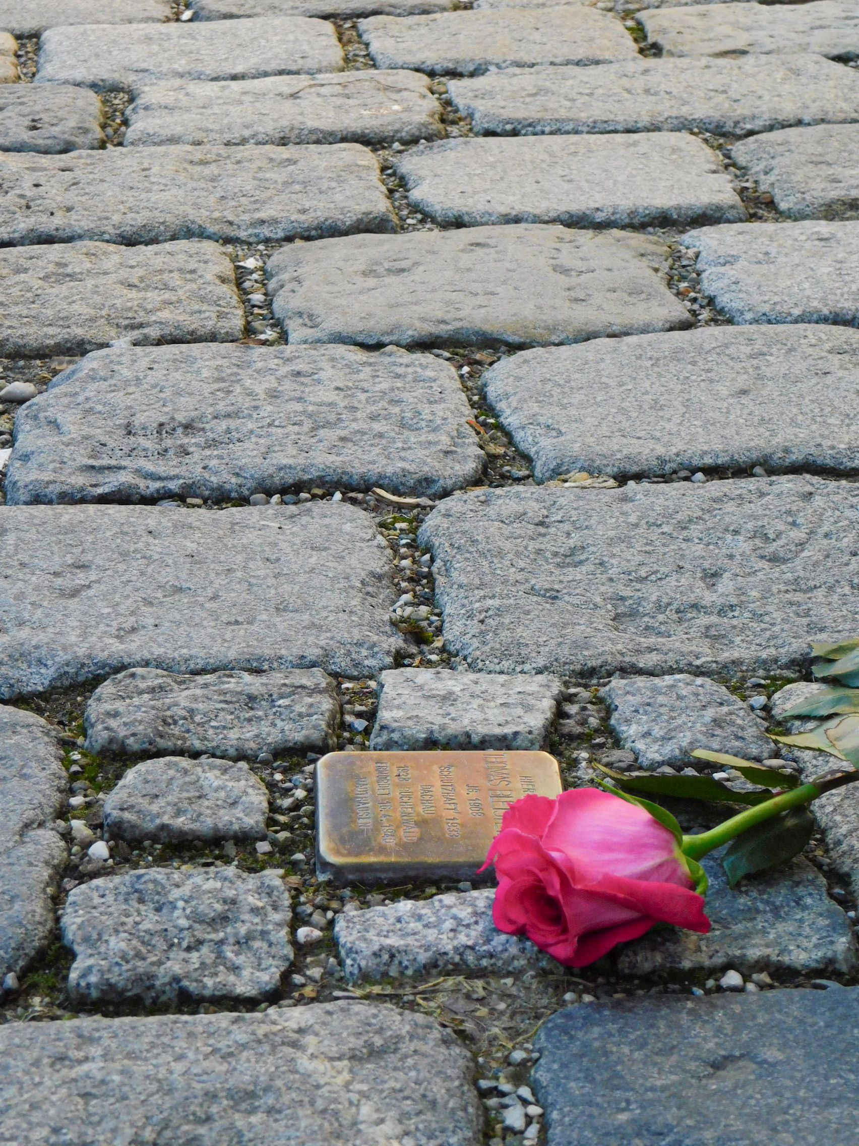 Stumble Stone with rose in Dachau, Photo: City of Dachau